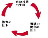 夏バテの負のサイクルを理解する